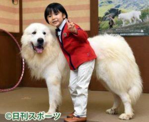 寺田心の成長と身長の確認画像(7歳)